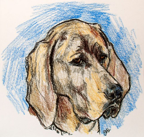 Hound Drawing