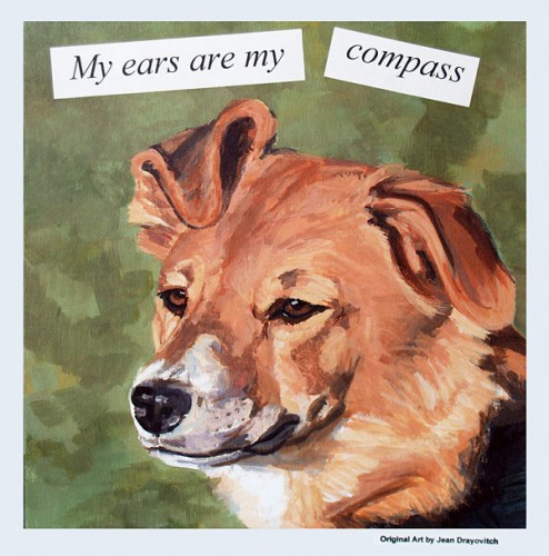 My Ears Are My Compass